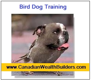 Bird Dog Training